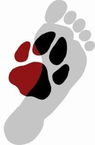 dogstodayfoot
