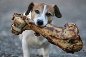 dog-with-big-bone