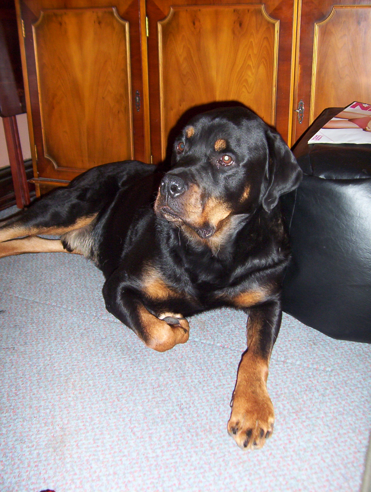 Why The Dots Above Rotties Eyes Paws For Thought