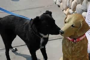 Dog saying hello to fake dog