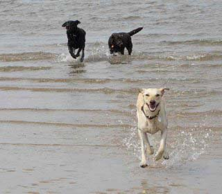 My dogs running out of the sea
